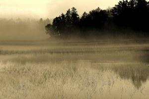 fog shot