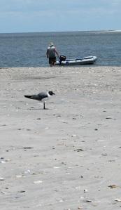 Sea, sand, sun & fun off the South Carolina coast. (OK, visitors, who can ID the bird?)