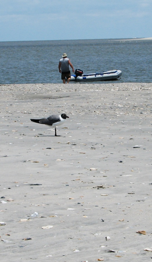 Sea, sand, sun & fun off the South Carolina coast. (OK, visitors, who can ID the bird?)
