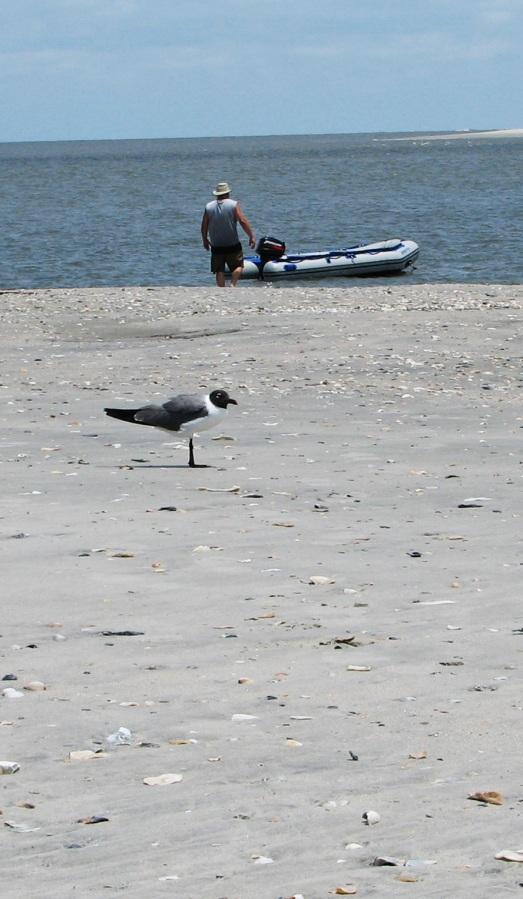 Sea, sand, sun & fun off the South Carolina coast. (OK, visitors, who can ID the bird?