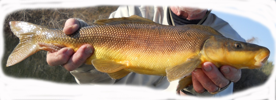 Every once in awhile, even Sea Eagle fishermen hook an ugly one...like this big bottom-feeding carp