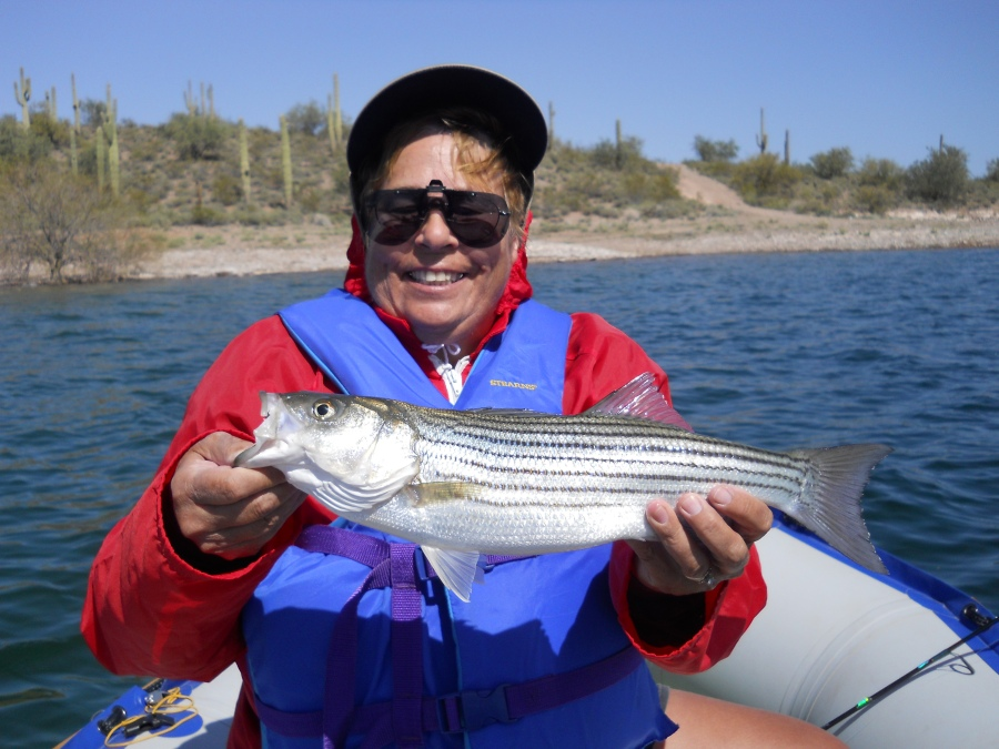 Joanne loves to fish and she does it well as evidenced by this beautiful striped bass she hooked in an Arizona lake