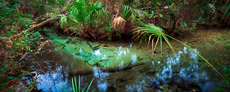 Richard captures moody and beautiful images of Florida's back country, as in this photo he took at Silver Springs.